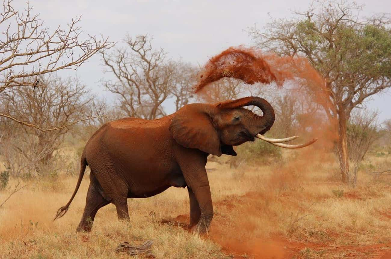 Elephant Has Had Enough Of Bei is listed (or ranked) 4 on the list 10 Times Animals Attacked People Trying To Poach Them