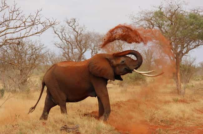 Elephant is listed (or ranked) 4 on the list 10 Times Animals Attacked People Trying To Poach Them