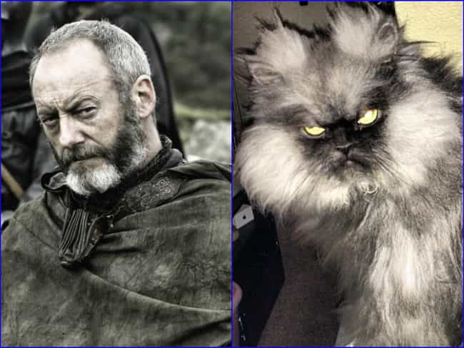 Davos Seaworth is listed (or ranked) 1 on the list 20 Cats Who Look Like GoT Characters