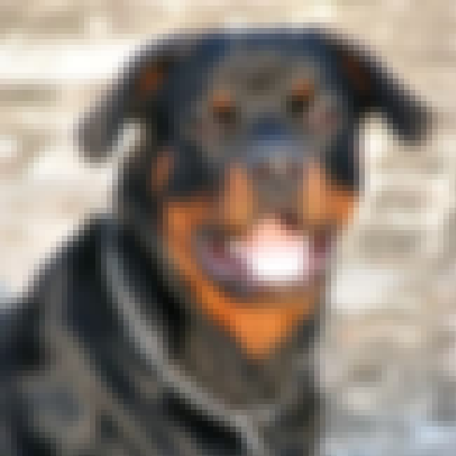 Rottweiler is listed (or ranked) 2 on the list The Scariest Types of Dogs in the World