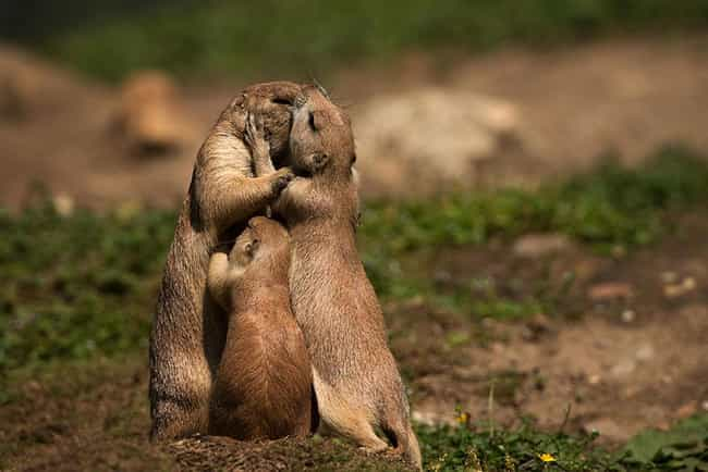 Prairie Dogs and Pup