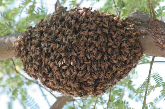 African bee is listed (or ranked) 2 on the list 12 Even Scarier Facts About The Most Terrifying Animals In The World