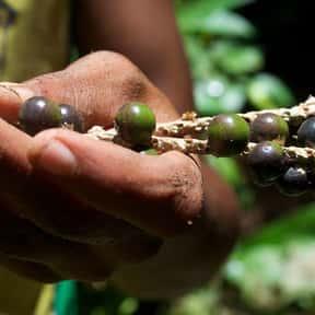 Açaí is listed (or ranked) 16 on the list The Best Tropical Fruits
