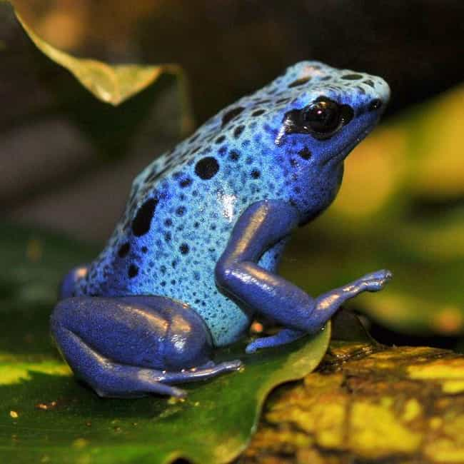 Poison dart frog is listed (or ranked) 1 on the list The Most Poisonous Frogs & Toads