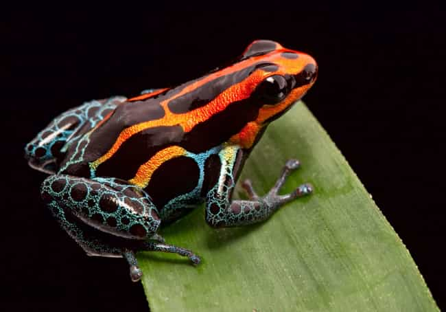 Poison dart frog is listed (or ranked) 2 on the list The 11 Most Poisonous Animals In The World Ranked By How Quickly They Kill You