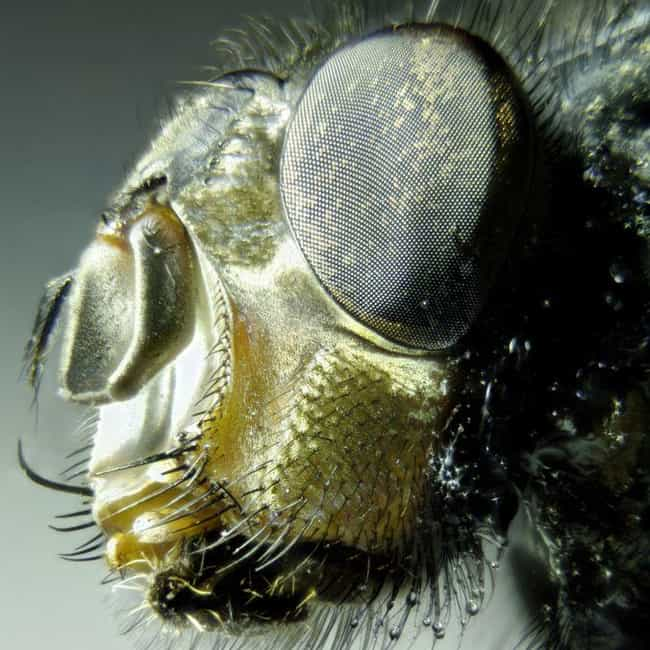 Housefly is listed (or ranked) 4 on the list Creepy Insect Facts That Will Keep You Up At Night