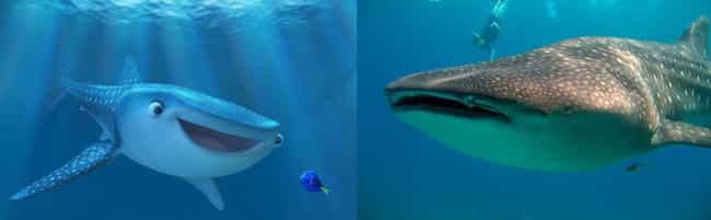 Whale shark is listed (or ranked) 4 on the list What the Species in Finding Dory Look Like in Real Life
