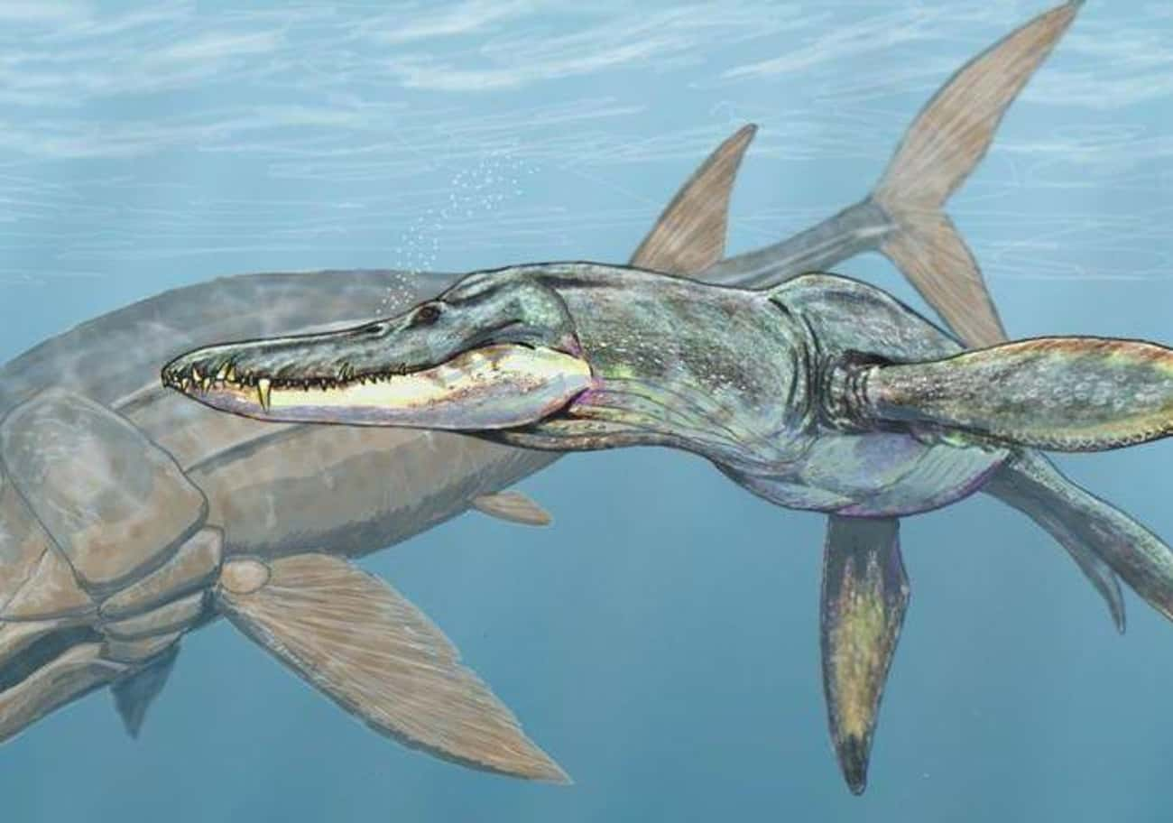 Liopleurodon, A Reptilien Behe is listed (or ranked) 4 on the list The Most Horrifying Sea Monsters To Ever Terrorize The Ocean