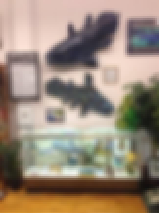 Coelacanth is listed (or ranked) 2 on the list The Most Bizarre Things On Display At The Cryptozoology Museum