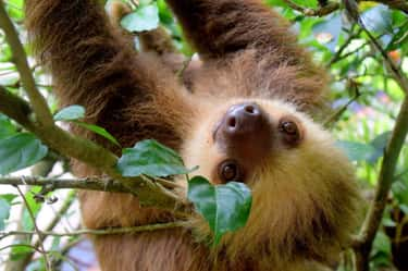Taurus: Sloth is listed (or ranked) 2 on the list Which Wild Animal Are You Most Like, According To Your Zodiac Sign?