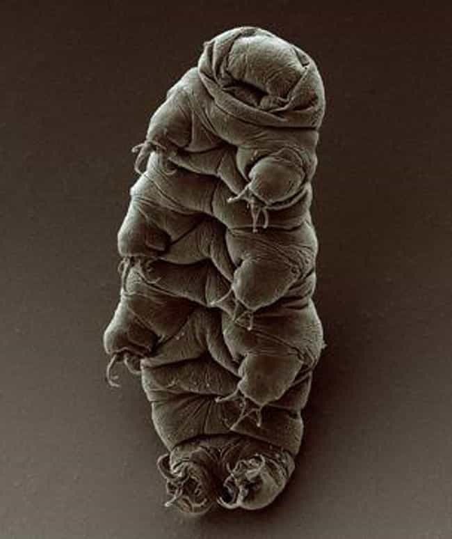 Tardigrade is listed (or ranked) 2 on the list Animal Facts That Sound Fake, But Are 100% Legit