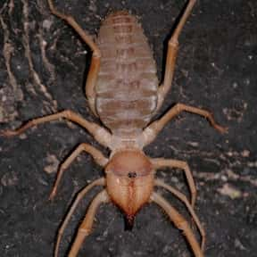 Camel Spider is listed (or ranked) 17 on the list The Scariest Animals in the World