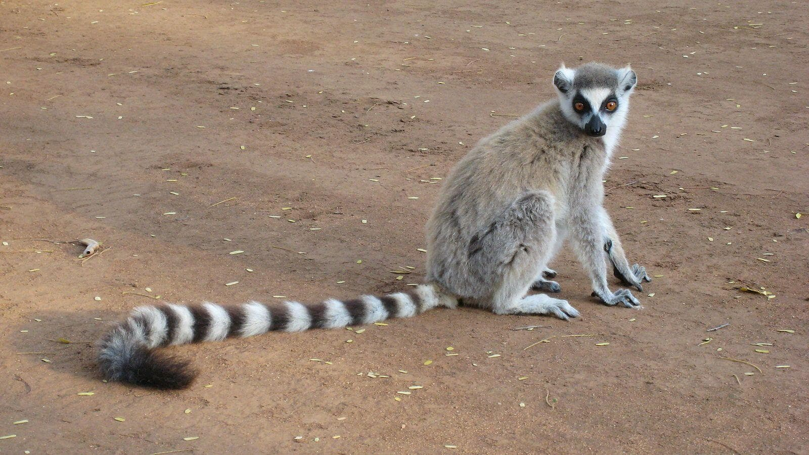Image of Random Insanely Cool Animals You Can Only Find In Madagascar