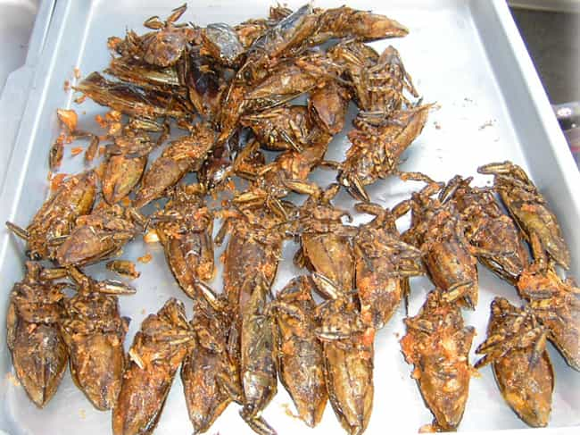 Giant water bug is listed (or ranked) 1 on the list Here's What Different Bugs Actually Taste Like