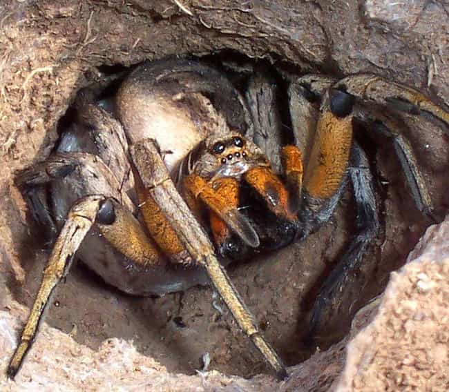 Wolf spider is listed (or ranked) 2 on the list The Scariest Types of Spiders in the World