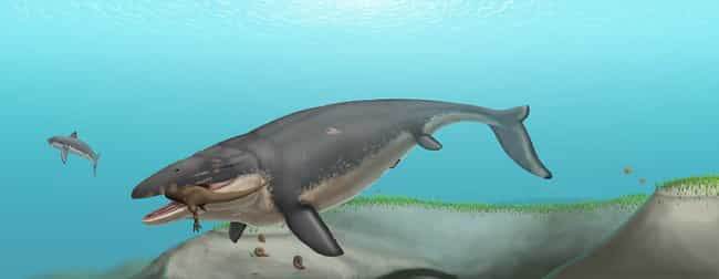 Mosasaurus is listed (or ranked) 4 on the list The Most Horrifying Sea Monsters To Ever Terrorize The Ocean