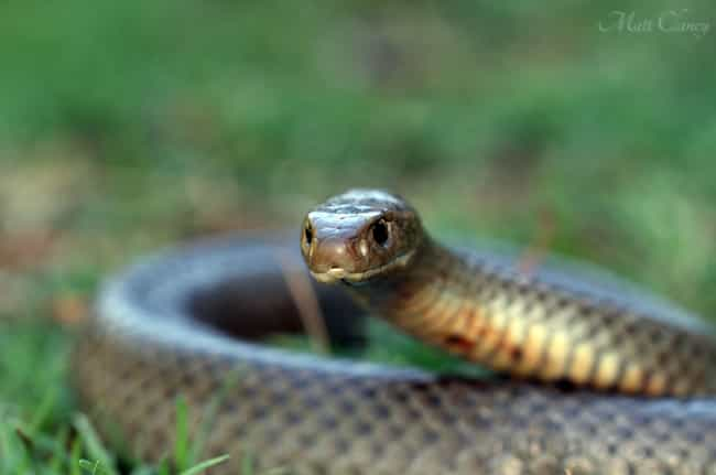 Eastern brown snake is listed (or ranked) 3 on the list The Scariest Types of Snakes in the World