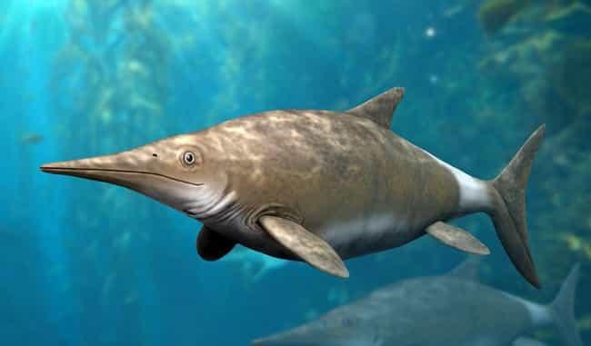 Ichthyosaurs, The Jurassic Dolphin