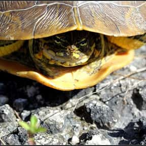 Box turtle is listed (or ranked) 13 on the list The Best Pets for Kids