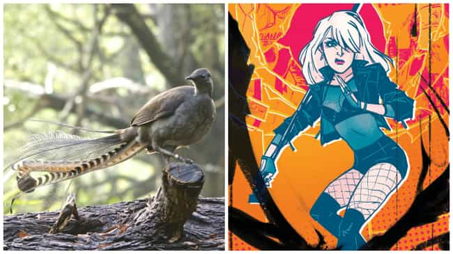 Lyrebird is listed (or ranked) 4 on the list Real Animals That Literally Have Superpowers