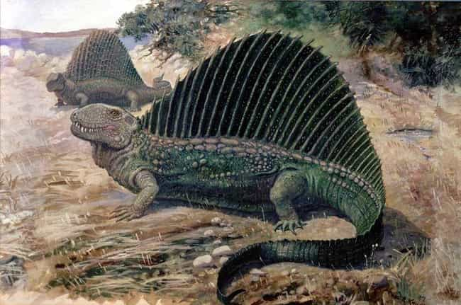 Dimetrodon is listed (or ranked) 2 on the list 12 Famous Prehistoric Animals You'll Be Surprised To Learn Aren't Actually Dinosaurs