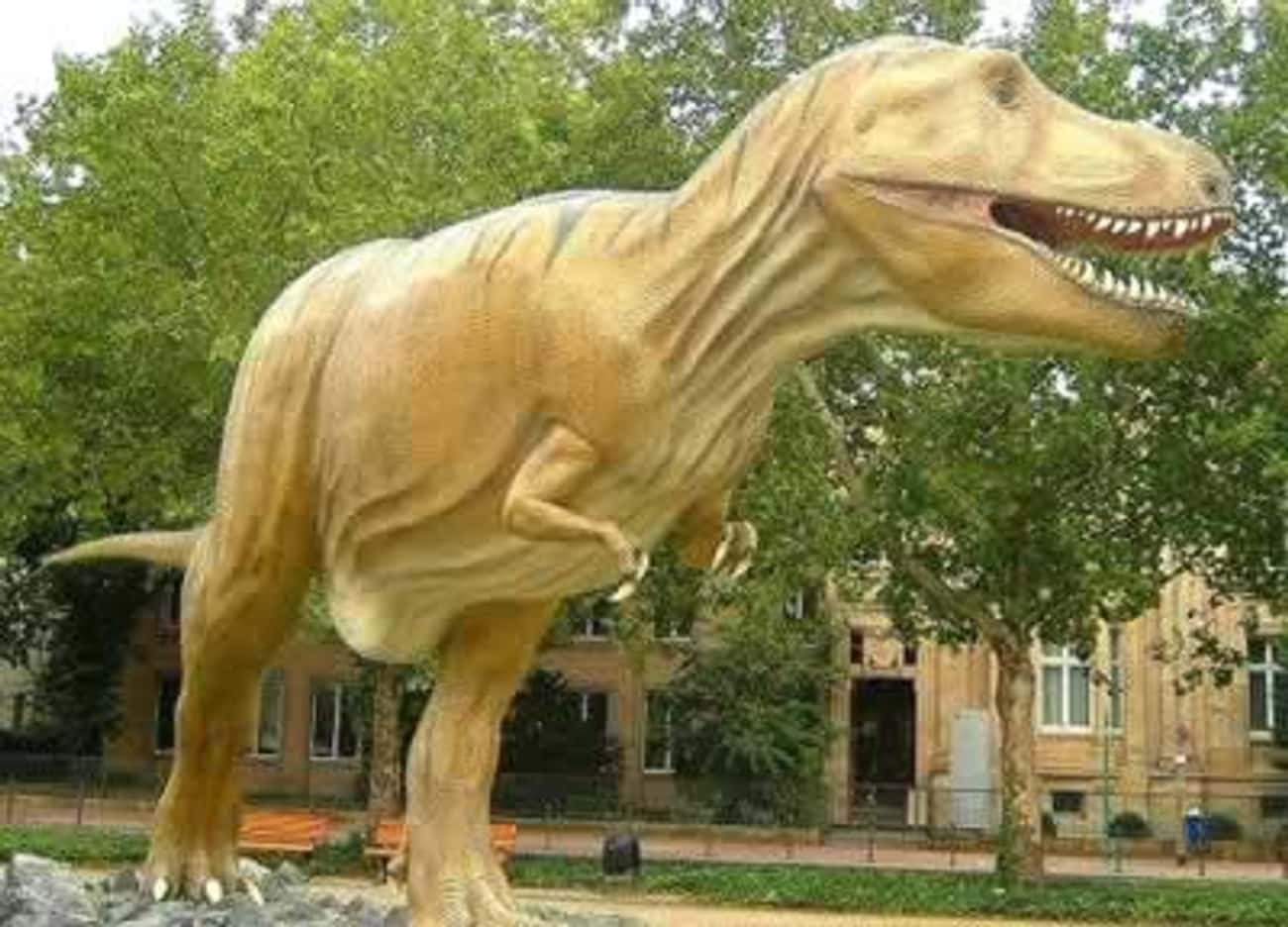 Tyrannosaurus Rex (extinct 65 is listed (or ranked) 1 on the list 10 Most Amazing Extinct Animals