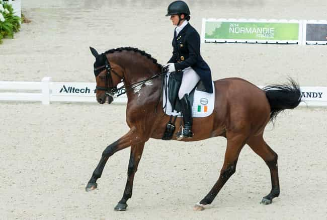 Anna Merveldt is listed (or ranked) 1 on the list Famous Equestrians from Canada