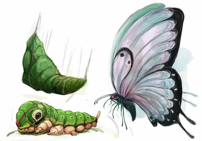 Caterpie, Metapod, and B... is listed (or ranked) 4 on the list This Artist Draws Pokémon In Grotesquely Realistic Style