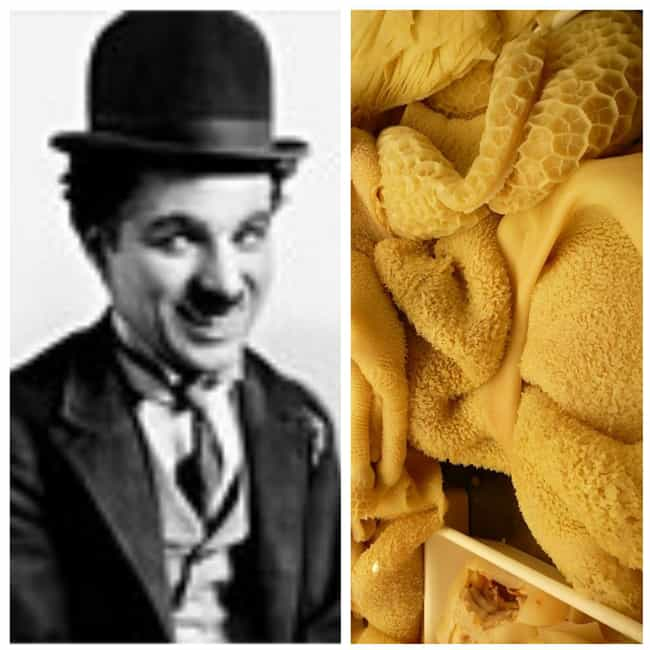 Charlie Chaplin is listed (or ranked) 3 on the list The Favorite Foods Of 15 Historical Figures