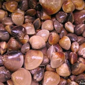Clams is listed (or ranked) 5 on the list All Low Carbohydrate Foods