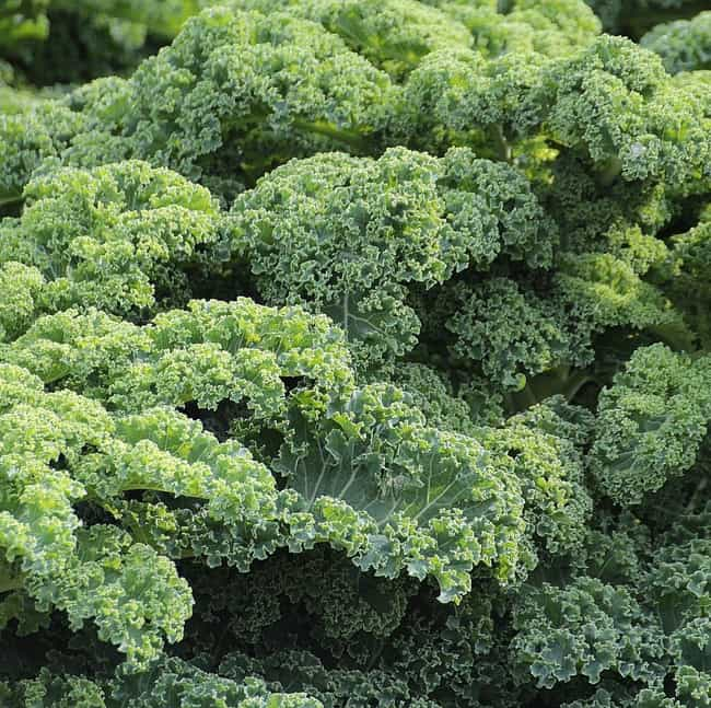 Green Leafy Vegetable is listed (or ranked) 3 on the list Things That Change the Color of Your Poop