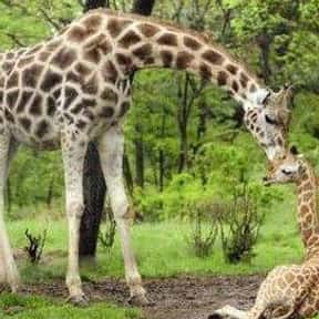Bronx Zoo is listed (or ranked) 8 on the list The Best Zoos in the United States