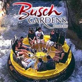 Busch Gardens Tampa Bay is listed (or ranked) 13 on the list The Best Theme Parks For Roller Coaster Junkies