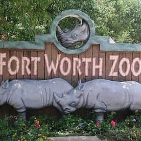 Fort Worth Zoo is listed (or ranked) 5 on the list The Best Zoos in the United States