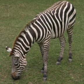 Indianapolis Zoo is listed (or ranked) 20 on the list The Best Zoos in the United States