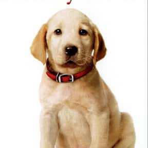 Marley & Me is listed (or ranked) 21 on the list The Best Movies Released Christmas Day