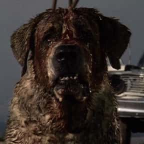 Cujo is listed (or ranked) 5 on the list Stephen King's Scariest Characters, Ranked