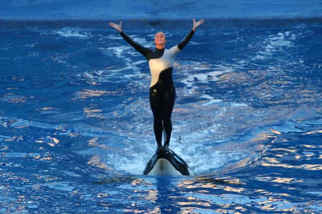 Blackfish is listed (or ranked) 2 on the list The 11 Most Awful Incidents to Ever Happen at SeaWorld