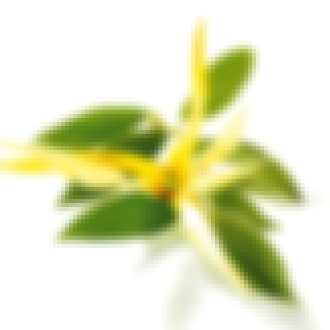 Ylang Ylang is listed (or ranked) 4 on the list The Best Essential Oils for ADHD