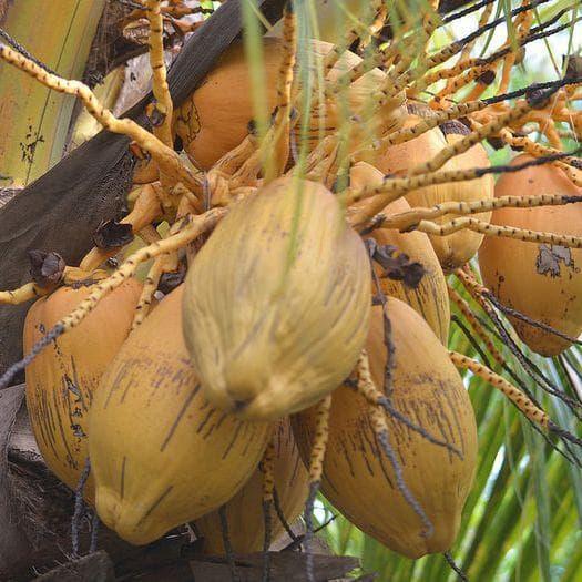 Coconut on Random Best Tropical Fruits