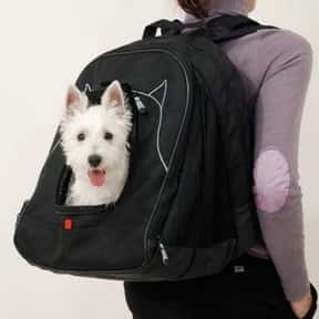 PetEgo is listed (or ranked) 11 on the list The Best Pet Clothing Brands