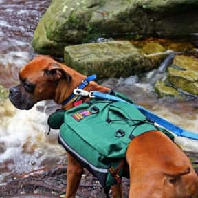 Outward Hound is listed (or ranked) 12 on the list The Best Pet Clothing Brands