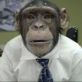 smirkingchimp.com