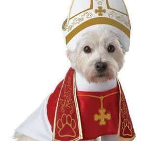 California Costumes is listed (or ranked) 18 on the list The Best Pet Clothing Brands