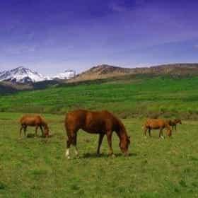 Equine Sports