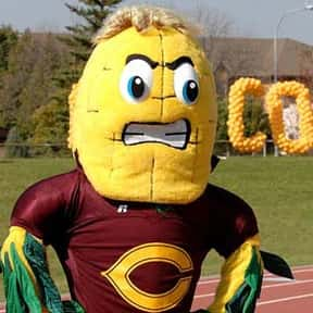 Concordia College is listed (or ranked) 7 on the list Universities With The Dumbest College Mascots