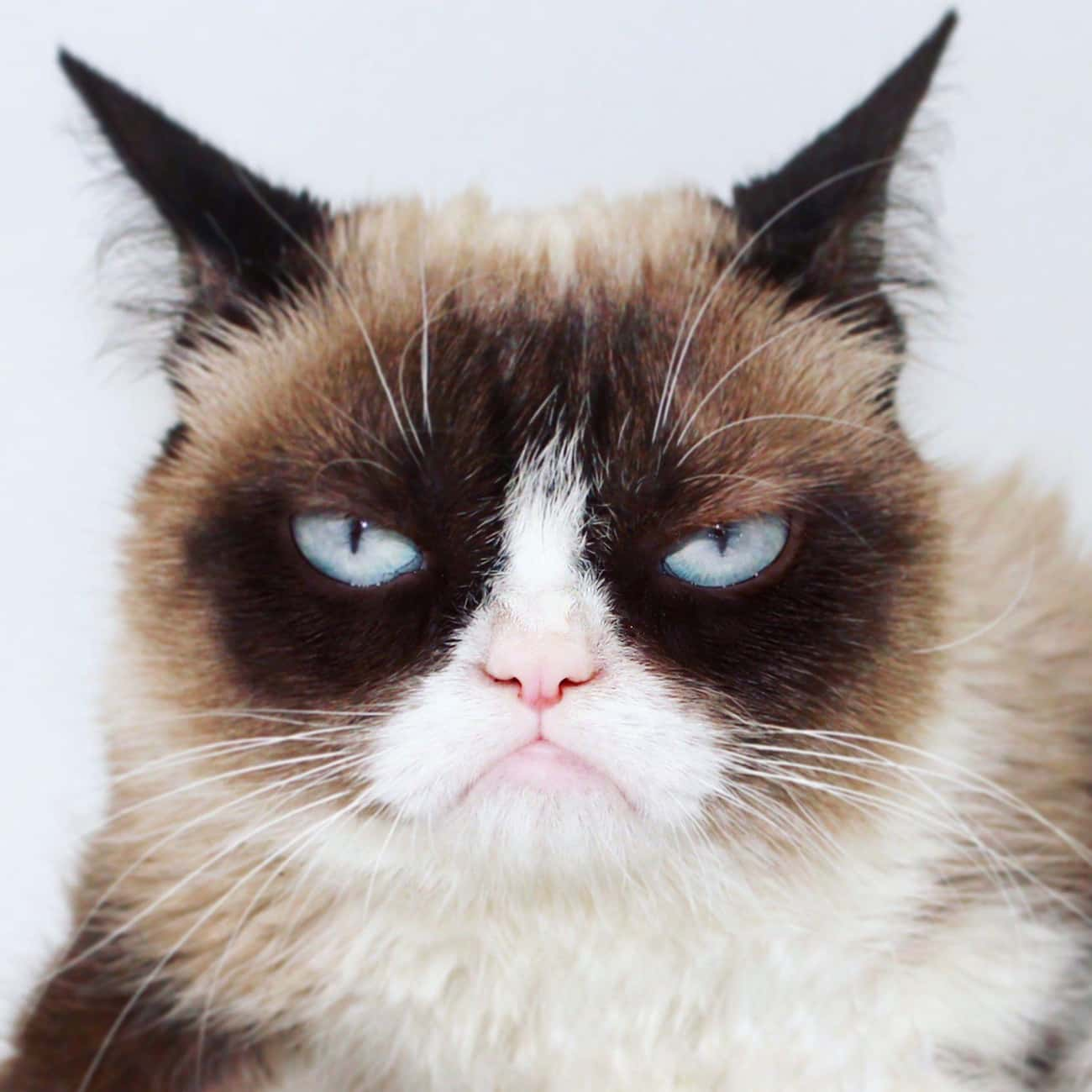 Grumpy Cat is listed (or ranked) 4 on the list Resting Bitch Face: Who Does It Best?