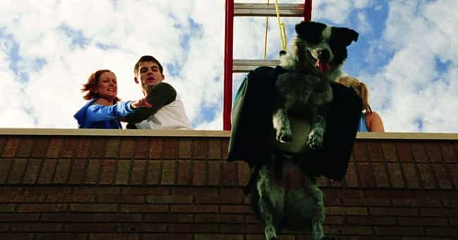 Dawn of the Dead is listed (or ranked) 2 on the list The Best Final Pets That Make It Through Horror Movies