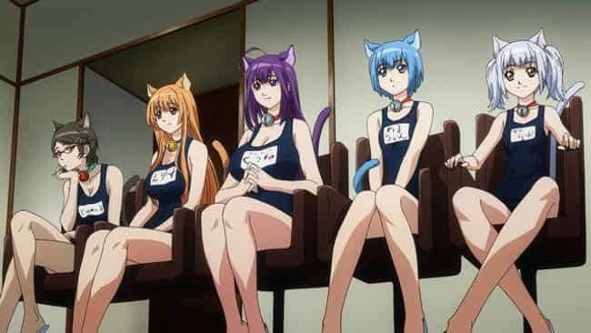 Cat Planet Cuties is listed (or ranked) 2 on the list The 15 Best Ecchi Anime OVAs of All Time