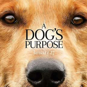A Dog's Purpose is listed (or ranked) 24 on the list The Greatest Dog Movies Of All Time